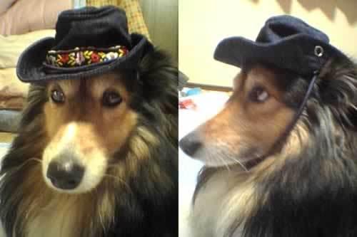 動物病院、美容室のHP制作はお任せください!@WEB制作CUBES-帽子だよ