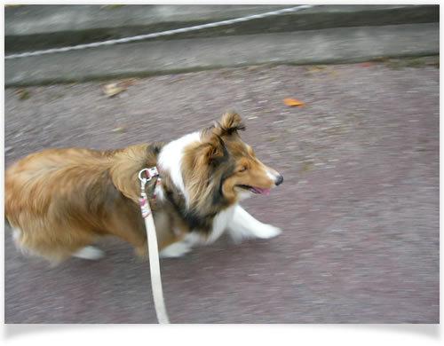 動物病院、美容室のHP制作はお任せください!WEB制作CUBES-お散歩 お散歩