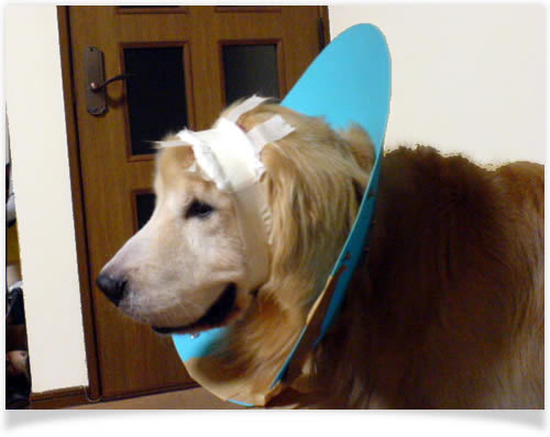 動物病院、美容室のHP制作はお任せください!WEB制作CUBES-頭から血が・・・・。