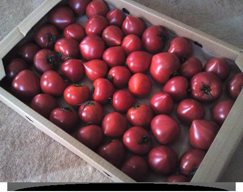 大阪の太っちょWebクリエイターCUBES-トマトでした
