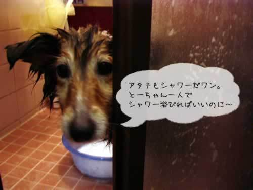 お風呂嫌いだよ~