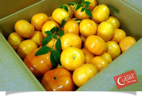 ミカンと柿