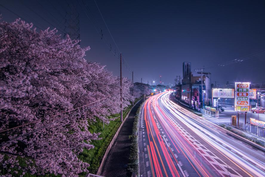 寝屋川のホームページ制作会社CUBESが撮影した夜桜